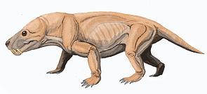 Moschorhinus