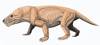 Therocephalia - Moschorhinus