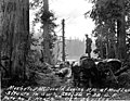 Mosher and McDonald Logging Railroad, Mud Lake, Washington, October 26, 1898 (INDOCC 116).jpg