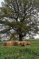 Muiravonside Country Park sculpture and tree.jpg