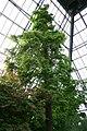 Muttart Conservatory (4509477465).jpg