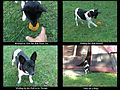 My rat terrier at Long Lake Campground..jpg