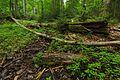 Národná prírodná rezervácia Stužica, Národný park Poloniny (19).jpg