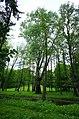 Największe drzewo w parku - panoramio.jpg