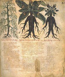 Manuscrito del De materia medica de Dioscórides, mostrando las supuestas propiedades medicinales de la mandrágora