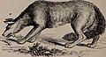Natural history of animals; (1895) (14780204644).jpg