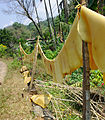 Natural rubber drying 2.jpg