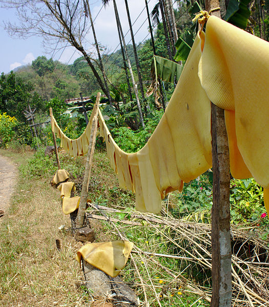 File:Natural rubber drying 2.jpg