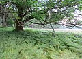 Nature reserve Prameniště (14).jpg