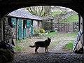 New Ing Farm, Shap - geograph.org.uk - 1133694.jpg