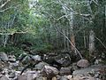 Newlands Forest river and indigenous forest - Cape Town.jpg
