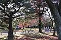 Nijo Castle 171206 (38416943944).jpg
