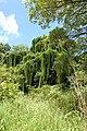Nkhotakota Wildlife Reserve, Malawi (2499242426).jpg