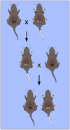 Non-Mendelian inheritance of mouse paramutations.png