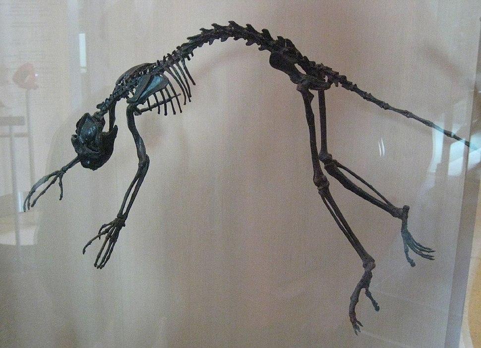 Notharctus tenebrosus AMNH