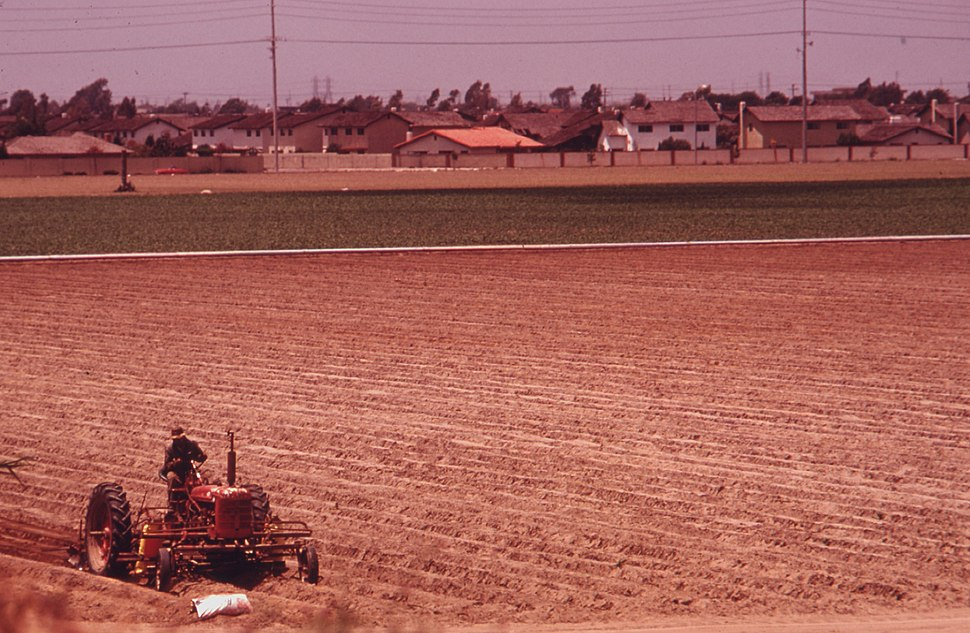 ONE OF A FEW REMAINING FARM FIELDS NEAR THE OCEAN IN FAST GROWING ORANGE COUNTY. SOME 4 PERCENT OF THE STATE... - NARA - 557476 (cropped)