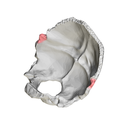 Occipital bone Lateral angle05.png