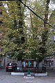Odesa Koblewska SAM 9729 51-101-0499.JPG