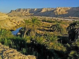 Wildlife of Oman - Oasis in an Oman desert landscape