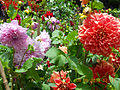 Ooty Botanical garden101.JPG