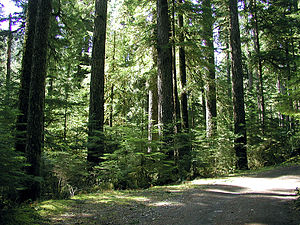 Willamette National Forest - Old-growth forest in the Opal Creek Wilderness