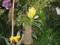 Orquidea 2003 002.jpg