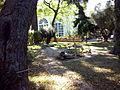 Orto botanico di Napoli 86.jpg