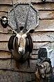 Oryx gazella antelope head, wall mounted taxidermy, at Lower Beeding, West Sussex, England.jpg