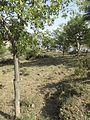 Outside garden of ramkort Fort.jpg