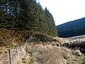 Outside the Hafren Forest boundary fence - geograph.org.uk - 1115155.jpg