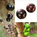 Owoce Mircjaria.jpg