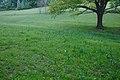 Přírodní památka V Krátkých, okres Uherské Hradiště (06).jpg
