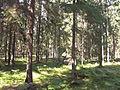 P.Białowieska kw. 182C.JPG
