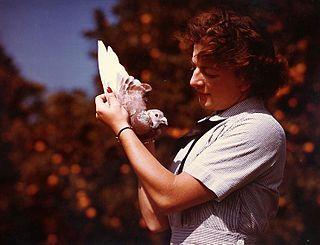 Pigeoneer (United States Navy)