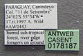 Pachycondyla verenae casent0178187 label 1.jpg