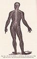 Page 214 Nervous System.jpg