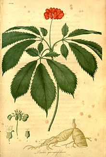 Ginseng In Illinois Map.American Ginseng Wikipedia