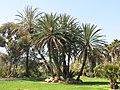 Parc Olbius Riquier - Palm trees.jpg