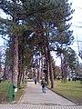 Parku i paqes.jpg