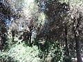 Parque Infanta Elena (Sevilla) 26.jpg
