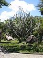 Parque del Este 2012 041.JPG