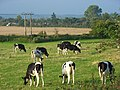 Pasture, Sonning - geograph.org.uk - 948073.jpg