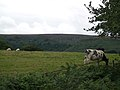 Pasture land below Blorenge, near White House Farm - geograph.org.uk - 926006.jpg
