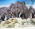 Penguins in Tierpark Hellabrun.jpg