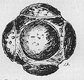 Petrosphere.jpg
