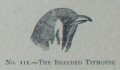 Picture Natural History - No 111 - The Bearded Titmouse.png
