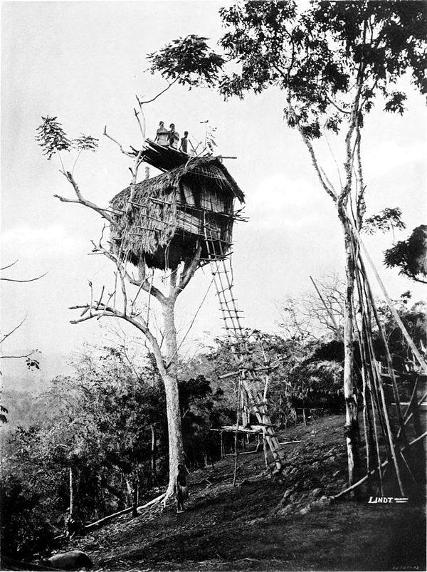 Black and white photograph of a house in a tree, with long ladder connecting it to the ground.