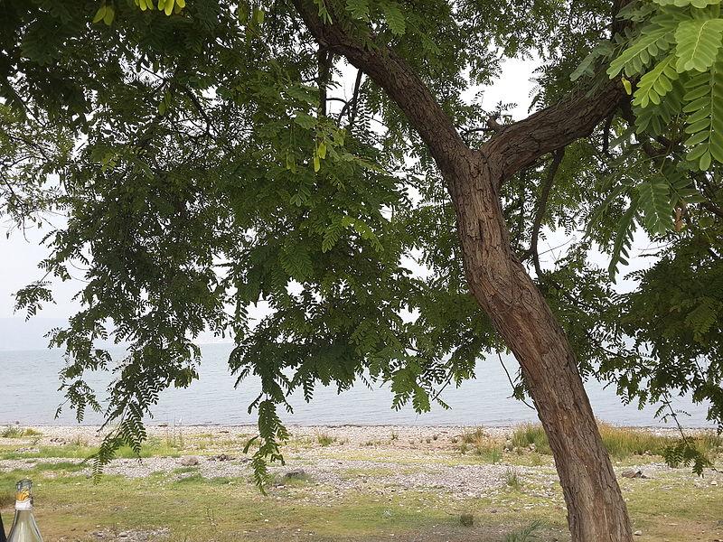 טבריה - חוף גופרה