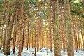 Pinchot Trail (1) (8413117918).jpg