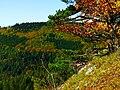 Pines And Oaks - panoramio.jpg